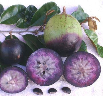 Purple Atis